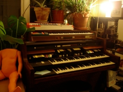 BLATNOVA - studio. plants.